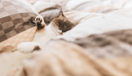 【API Client】InsomniaでAPIの動作確認を楽にしよう